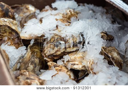 A box of fresh oysters packed in shaved ice .