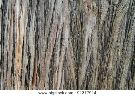 Tree Bark With Deep Furrows