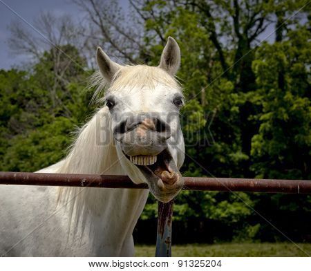 Funny horse making a face