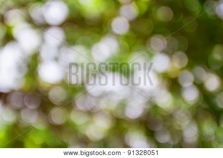 Sunny Abstract Green Nature Background