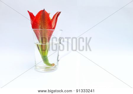 flower and cup