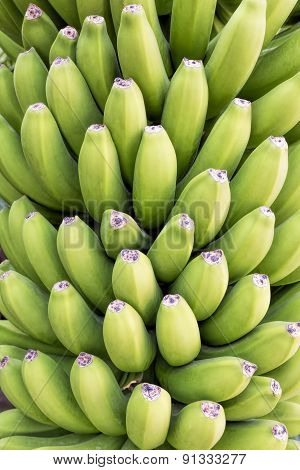 Green bananas can be used as food background