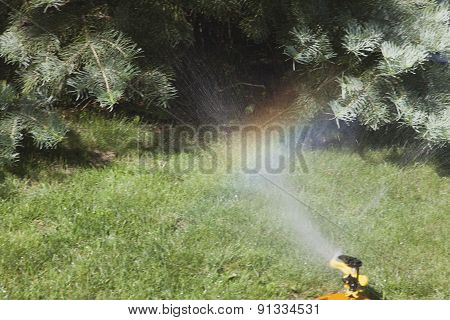 Device Of Irrigation Of Lawn.
