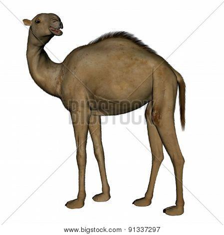Camel standing - 3D render