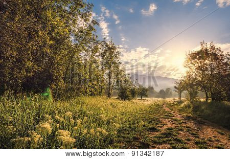 Landscapes Colors  Woodland Summer Non-urban Nature Sunlight