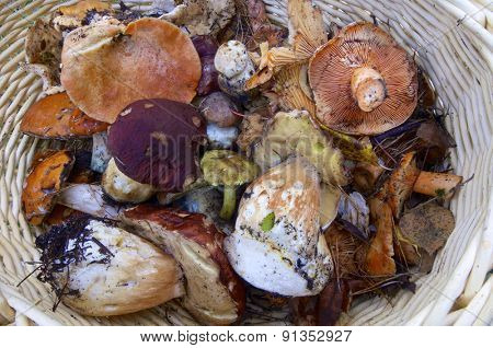 mushroom basket in Pineta Valley, Pyrenees, Huesca, Aragon, Spain
