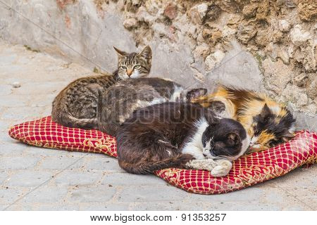 Homeless cats in Morocco