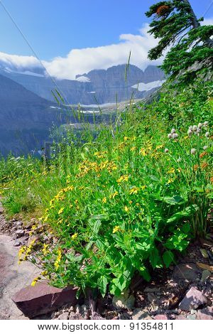 Wild Flowers In High Alpine Landscape On The Grinnell Glacier Trail In Glacier National Park, Montan