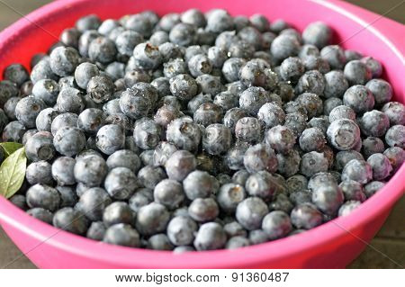 Blueberries Berry.