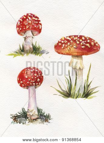 Hand Drawn Illustration Of Watercolor Amanitas