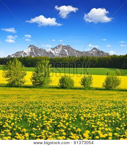 Spring mountain landscape with dandelions on the meadow