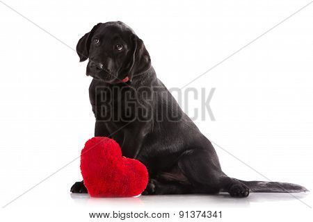 A lover valentine puppy dog with a red heart isolated on white