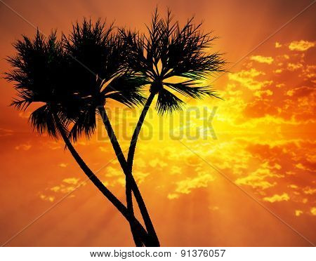 Three palm trees silhouetted against colorful sunset over sea