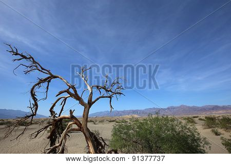 dead trees in death valley national park, California