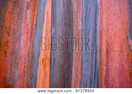 Colorful Pattern Of Rainbow Eucalyptus Tree Bark As A Background