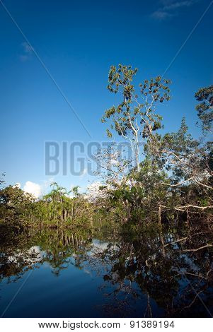 Beautiful landscape in Panacocha lagoon Rainforest nature, Ecuador