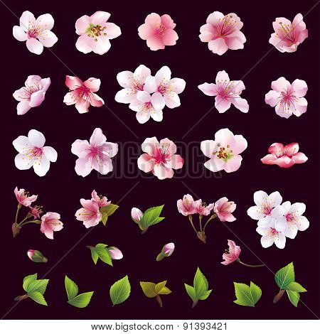 Set Of Flowers Of Cherry Tree And Leaves