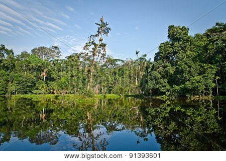 Beautiful landscape of nature reflected in amazon rainforest river, Yasuni National Park, Ecuador