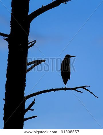 Silhouette Of A Heron.