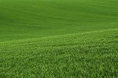 foto of southern  - Green grass fields  suitable for backgrounds or wallpapers - JPG