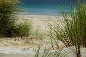 stock photo of dune grass  - Grasses on the top of a sand dune - JPG