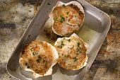 stock photo of scallops  - Presentation of scallops au gratin baked with parsley - JPG