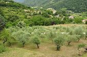 pic of apennines  - Italian countryside between Firenze and Bologna  - JPG