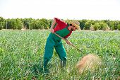 foto of orchard  - Farmer man working in onion orchard field with hoe tool - JPG