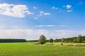 image of hay bale  - Agricultural Landscape field corn and hay bales - JPG