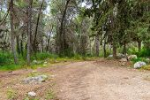 picture of coniferous forest  - Beautiful forest road in coniferous forest in the spring - JPG