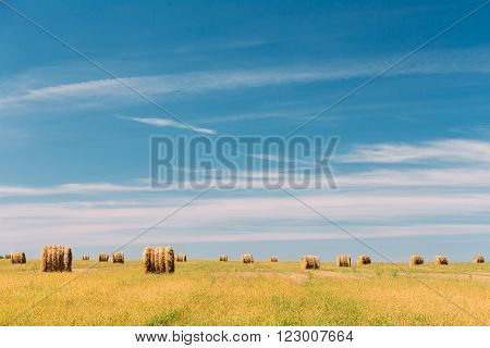 Rural Landscape Field Meadow With Many Hay Bales After Harvest in Sunny Day in Late Summer, Early Autumn. Blue Sky.