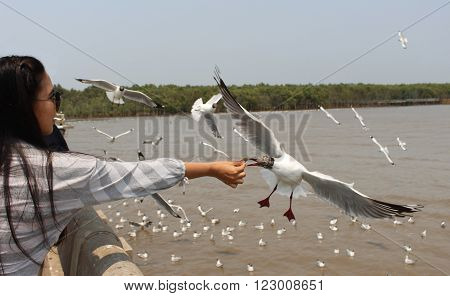 Seagulls flying on the sky background. Woman feeding seagulls