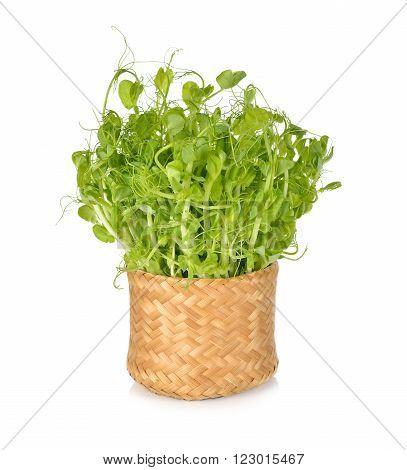 heap of snow pea sprouts or Toumyou sprouts in bamboo basket on white background