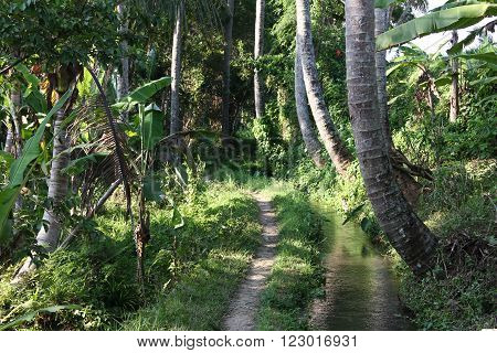 Trail in palm forest and clear stream in countryside in Bali near Ubud. Beautiful nature harmony and tranquility.