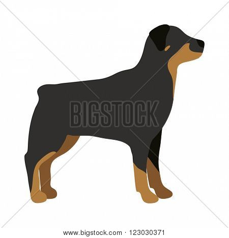 Angry flat dog pet and dog vector. Flat retriever dog animal vector illustration. Angry danger dog fsitting lat style