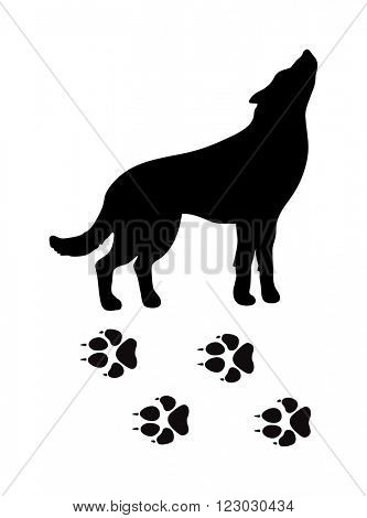Wild wolf animal powerful hunter black silhouette and wild animal predator symbol. Predator silhouette. Wild life black animal silhouette. Black silhouette wild animal zoo vector.