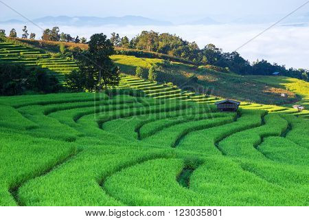 Rice field on the mountain with background lighting in the evening.