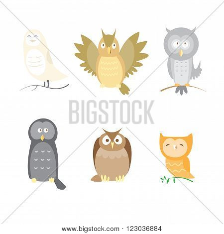 Cartoon owls set. Six different species of owls. Vector image.