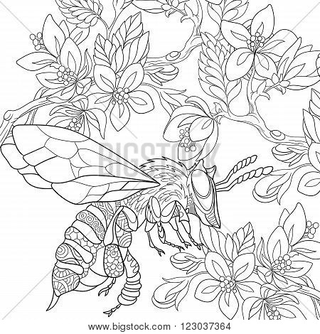 Zentangle stylized cartoon bee flying among sakura flowers. Sketch for adult antistress coloring page. Hand drawn doodle zentangle floral design elements for coloring book.