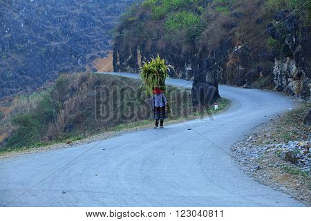 HA GIANG, VIETNAM - FEB 7: Unidentified Hmong woman carrying a bundle of sugarcane while walking home on February 7, 2014.