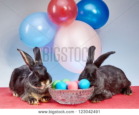 Against the background of balloons the rabbits near a vase with Easter eggs