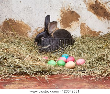 Against the background of rural walls the rabbit is lying on hay
