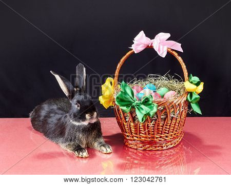 Easter basket with eggs and black rabbit