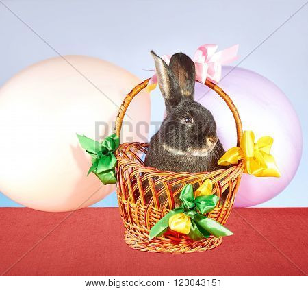 In decorated with colored ribbons and balloons basket  is sitting rabbit