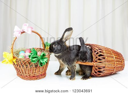 Rabbits have dropped out of the basket on a white background