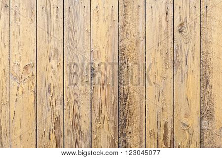 Natural Wood Texture Background With Natural Patterns