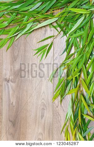 willow branch on a wooden background. vertical photo.