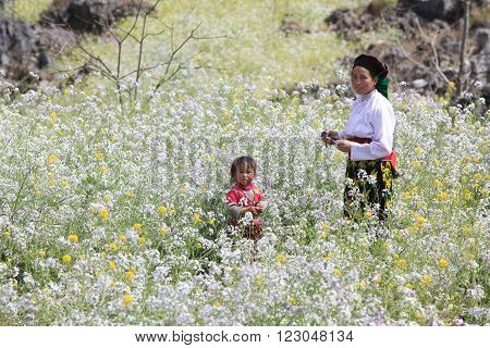 HA GIANG, VIETNAM - FEB 7: An unidentified Hmong woman playing with her child in a field of colorful flowers on a traditional holiday called Tet on February 7, 2014.