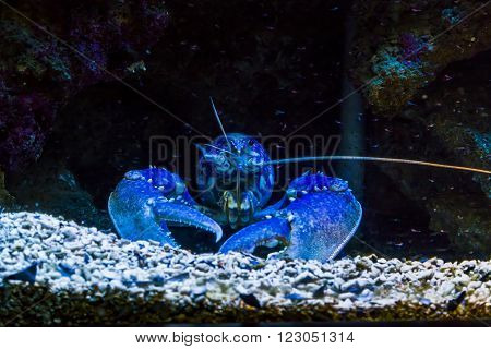 Monaco, Monaco - May 21: It is a sea crab which hidden in the bottom of the aquarium at the Museum of Oceanography May 21, 2015 in Monaco, Monaco.