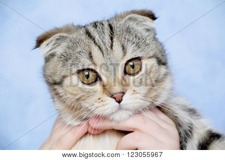 Photo of color cat with yellow eyes